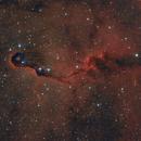 vdB 142 elephant trunk nebula),                                Giorgio Ferrari