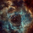 Rosette Nebula NGC 2244,                                Albert  Christensen