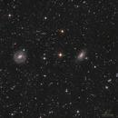 NGC 5101 & consors,                                Los_Calvos