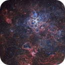 NGC 2070 The Tarantula nebula,                                Rocco Sung