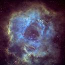Rosette in Hubble pallette,                                Dan Wilson