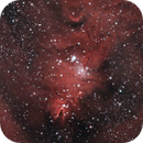 NGC 2264 - Cone and Christmas Tree Nebulae,                                Marco Rapino