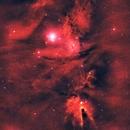 NGC 2264 The Cone, Christmas Tree, and Fox Fur Nebula,                                Greg Ray