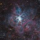 NGC 2070 Tarantel Nebula,                                Herbert_W