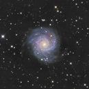 M74,                                jelisa