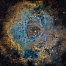 Rosette Nebula - Hubble Palette,                                Maniersch