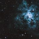 Tarantula Nebula,                                Zander Horn